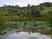 Malaysia_Lake_Chini_shutterstock_531980995