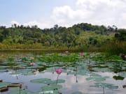 Malaysia_Lake_Chini_shutterstock_531981022