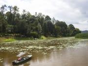Malaysia_Lake_Chini_shutterstock_139688785_shutterstock_548915413