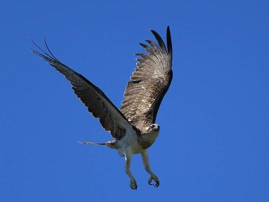 gi-tour-green-island-birdlife-05