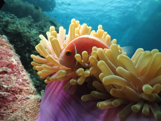 obr-tour-outer-reef-marinelife-25