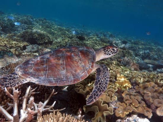 obr-tour-outer-reef-marinelife-39