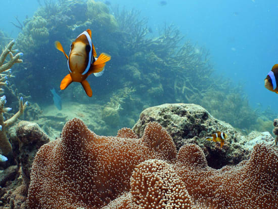 obr-tour-outer-reef-marinelife-28