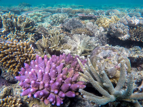 obr-tour-outer-reef-marinelife-18