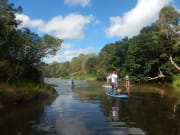 rainforest5_lg