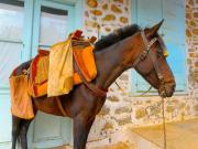 Greek donkey ride_Donkey_Poros