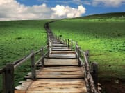 wooden path yak meadow jade dragon snow mountain