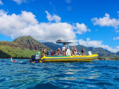 Hawaii_Oahu_Dolphin Excursions_Whale Watch