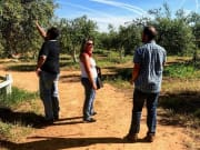 Seville, Andalusia Olive Oil Mill Tour
