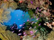 Coral-Sea-Hero