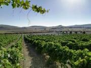 Jerez de la Frontera- viña