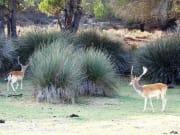 Doñana National Park (4)