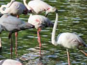 Doñana National Park (3)
