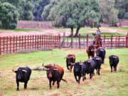 Brave Bulls Farm Tour
