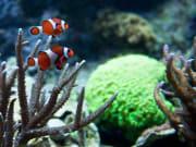 USA_Boston_New England Aquarium