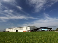 Sekinchan Rice Field