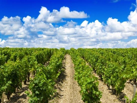France_Bordeaux_Vineyard_123RF_1448388_ML