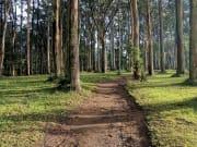 Yarra Valley Dandenong Ranges