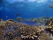 Ceb_diving