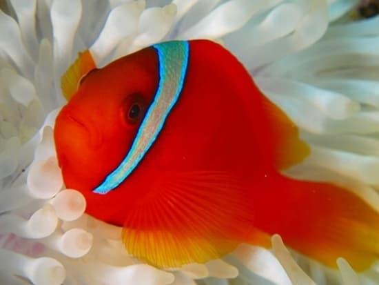 Cebu_diving2