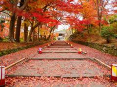 Japan_Kyoto_Bishamondo_Temple_Entrance_Autumn_Foliage_shutterstock_239033587