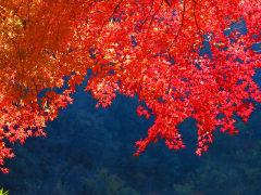 autumnal-leaves-1827868_1280