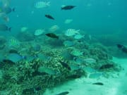 divingph03_021