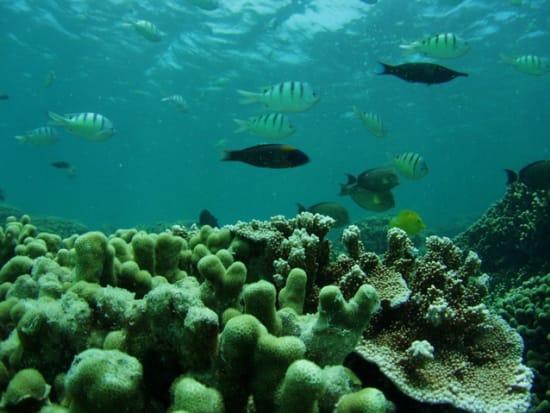 divingph03_026