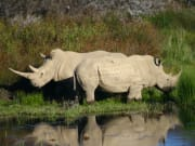 9955_cape-town-2-day-safari-chalet_3