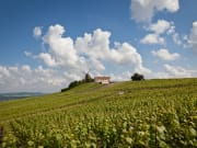 France_Champagne_Reims_Vineyards_shutterstock_201336512