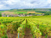 France_Montagne-de-Reims_Champagne-Vineyards_shutterstock_499273894