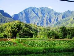 Scenic_-_Namolokama
