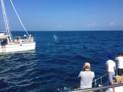 Sri Lanka Blue Whale Cruise in Trincomalee