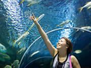 Cairns Aquarium Tunnel Guest