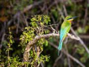 Bird Watching Excursion