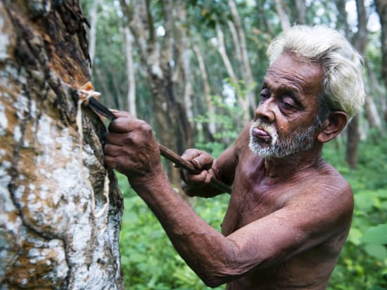 Sri Lanka_Galle_Rubber Tapping_Shutterstock