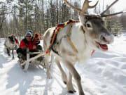 reindeer caravan, rovaniemi, lapland