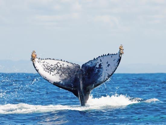 Hawaii_Maui_Maui Maritime_Whale Watching_340812662