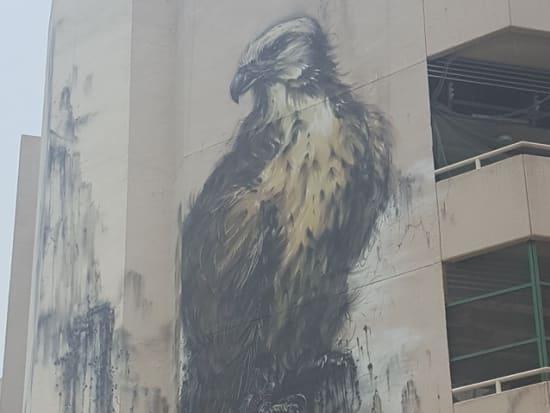 Satwa - Falcon