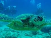 Joels_underwater_camera_266