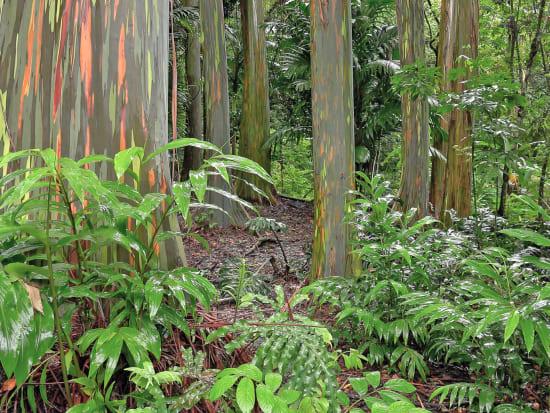 USA_Hawaii_Hana-Highway-Forest_123RF_44247856_ML