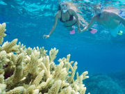couple snorkeling underwater great barrier reef