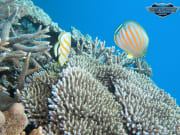 underwater corals and fish great barrier reef