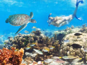 great barrier reef australia swimming with turtle