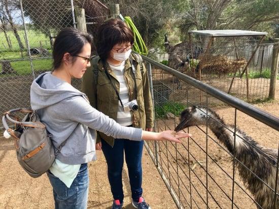 Maru Wildlife Park feeding Emu's
