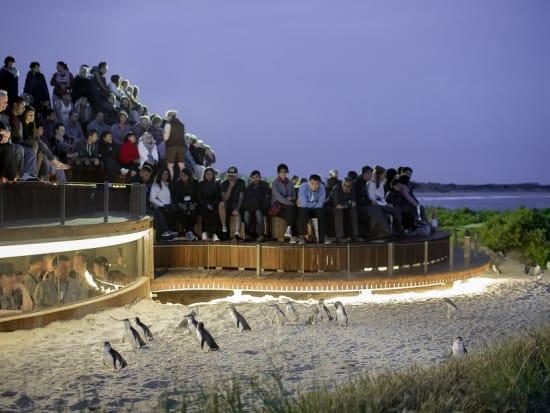 Penguins Plus