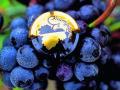France Champagne grapes