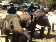 P-25:タイガーキングダム・スネーク&蘭園・象ショー