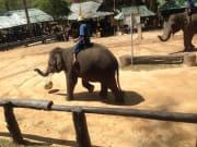 P-25:タイガーキングダム・スネーク&蘭園・象ショー01