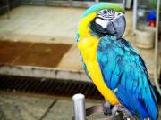Yuen Po Bird Garden